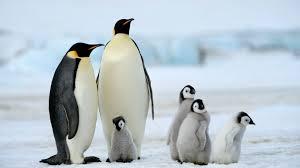 Fakta Unik Tentang Penguin